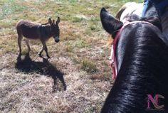 Rumor and Lil Donkey fixin' to trail ride :)