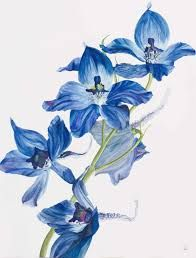 Image result for watercolour delphiniums