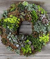 Need to look up how to make this Living Succulent Wreath