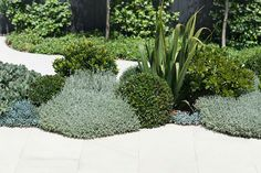 Drought tolerant plantings. Inner City Garden by Secret Gardens