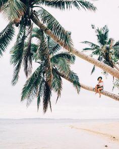 """""""Picking coconuts the Fijian way."""" - Instagrammer gypsea_lust http://www.fiji.travel"""