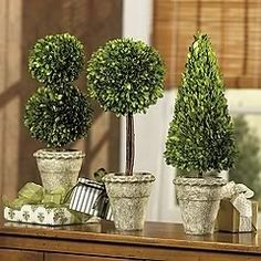 For your holiday table setting any combination of these mini topiary, available at Ballard Designs , will add the greenery to create the per. Boxwood Tree, Boxwood Topiary, Topiary Trees, Topiary Decor, Topiary Plants, Christmas Topiary, Green Christmas, Preserved Boxwood, Diy Centerpieces
