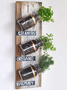 Glass jars are ideal candidates for your next indoor garden. Re-create this wall-mounted collection by first measuring and marking your jar placement on a piece of wood. Then, nail gold-painted clamps to the wood and slip glass jars planted with herbs between the clamps. Secure with a screwdriver. Finish by painting chalkboard labels, naming each herb, onto the wood. /