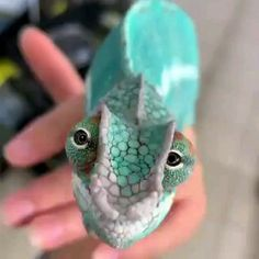 his chameleon is so cutee!😍😍 Currently, there are around 200 different chameleon species, 44 percentof which can be found on Cute Creatures, Beautiful Creatures, Animals Beautiful, Strange Creatures, Beautiful Beautiful, Les Reptiles, Cute Reptiles, Funny Lizards, Reptiles And Amphibians