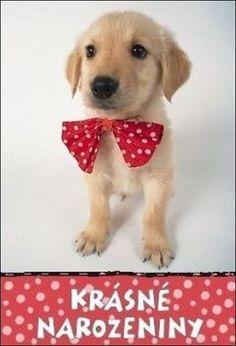 Labrador Retriever, Humor, Facebook, Retro, Funny, Photography, Google, Motorbikes, Labrador Retrievers