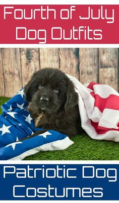 The best fourth of July dog outfits for patriotic dogs are comfortable, cool, and easy for the dog to wear. Scarves, Collars, and decorative hats count.