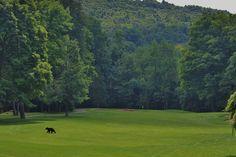 Black Bear Golf Club, Franklin NJ