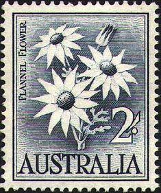 Australian Flannel Flower Stamp 1959 Actinotus helianthi (designer Margaret Stones)