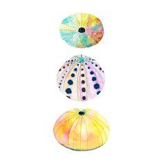 He encontrado este interesante anuncio de Etsy en https://www.etsy.com/es/listing/176118346/sea-urchin-watercolor-print-beach-decor