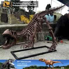 DS-052 Artificial Dinosaur Skeletion Replica for Sale