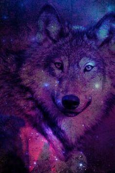line wallpaper #wolf #galexy #purple #wallpaper #line