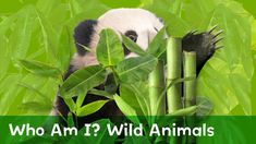 Can You Guess Which Wild Animals are Hiding?