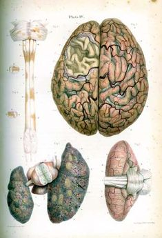 forty four coloured lithograph plates with accompanying descriptions of various pathological conditions