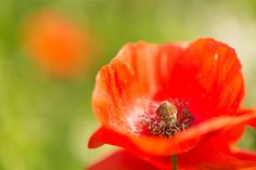 Check out Poppy by Screeny's Photo Bucket on Creative Market