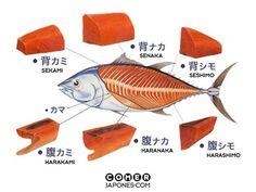 Las partes del atún