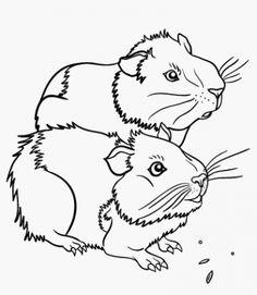 meerschweinchen malvorlage | niedliche meerschweinchen, malvorlagen tiere, ausmalbilder tiere
