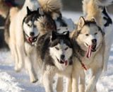 dog-sledding in Whistler, Canada. Totally a possibility for our trip!!!!