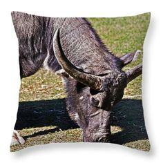 Asian Water Buffalo  Throw Pillow by Miroslava Jurcik