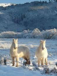 Cream colored ponies.