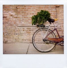 a lovely old schwinn and some tasty leafy greens