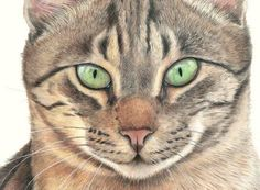 Drawing Fur with Coloured Pencils with Gayle Mason
