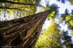 Jedediah Smith Redwood State Park, California
