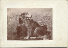 c.1900s cabinet card of gorgeous collie looking over her shoulder. Her name, Julia, is written in pencil on verso. From bendale collection