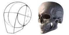 Draw the head using the Loomis method