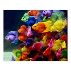 {Rainbow } Fish - Somewhere over the rainbow, colorful fish fly. Beautiful Creatures, Animals Beautiful, Cute Animals, Animals Sea, Colorful Fish, Tropical Fish, Colorful Animals, Rainbow Fish, Rainbow Colors