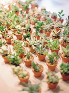 wedding favors | succulents | Photography: Desi Baytan Photography | Read More: http://stylemepretty.com/2013/05/06/long-beach-wedding-from-desi-baytan-photography/