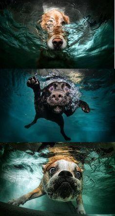 Underwater dogs - crazy!