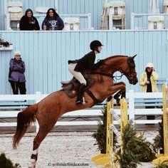 willslideforchocolate:Devon horse show