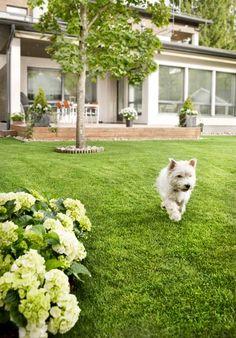 Kaunis ja hyvinvoiva nurmikko on jokaisen pihanomistajan haave.