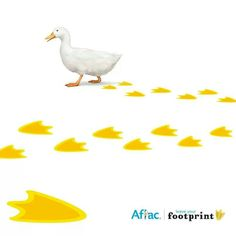 Aflac Income Protection, Peacocks, Pigs, Ducks, Bulletin Boards, Funny Animals, Funny Quotes, Wildlife, Owl