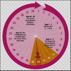 You can check also Menstrual Cycle Ovulation Calendar & Calculator, Fertility Calendar Template. Accurate Ovulation Calculator & Calendar Template in JPG, PNG. Fertility Cycle, Ovulatory Cycle, Period Cycle, Ovulation Calculator, Ovulation Calendar, Pregnancy Calendar, Free Calendar Template, Health Tips, Pregnancy