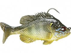 "Mattlures U2 Bluegill 3"" sinking or floating 17.99 The finned Boot Tail version is perfect for swimming over the tops of weeds and past ambush points where big bass are waiting to eat a little sunfish, and it can also be fished just under the surface, creating a wake that imitates a fleeing bluegill.TWH"