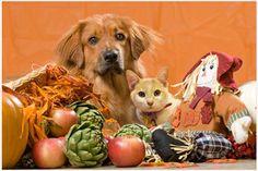 Buenos días 🌞   Feliz Día de Acción de Gracias 🙏🏽  #PetsWorldMagazine #RevistaDeMascotas #Panama #Mascotas #MascotasPanama #MascotasPty #PetsMagazine