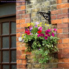 16 Hanging Flower Pot Plant Ideas To Enhance Your Veranda And Home Surroundings