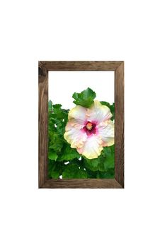 Hibiscus Flower Art Print, Tropical Wall Decor