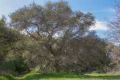 8. Garland Ranch Regional Park Located 10 miles East of Carmel on Carmel Valley Road. Many beautiful picnic spots.