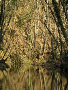 Rio Sanguigno, Monticiano #trekking
