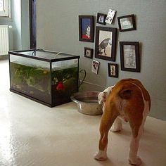 Decorating the dog's space!