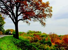 Grandview Drive, Peoria IL This time of year I really miss home!