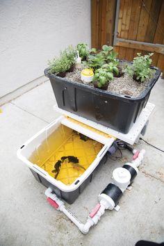 Build an Aquaponic Garden with Arduino — Gardening | Make: