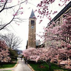Cornell University - Ithaca, NY