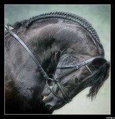 HORSE.....BEAUTY.........