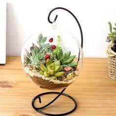 Resultado de imagem para jardim de inverno em vidro samambaias suspensas