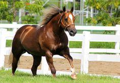 Lagos Ranch - Beaver Eternaly no Horse Brasil 2013