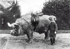 A boy and his hog.
