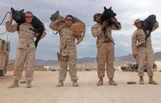 War Dogs have accompanied man into battle for more than 100 years. Military Working Dogs, Military Dogs, Police Dogs, Military Service, War Dogs, Game Mode, Malinois, Service Dogs, Pit Bulls